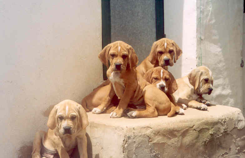 p.p.puppies_at_2000.jpg