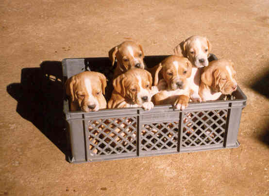 stella_puppies_91.jpg